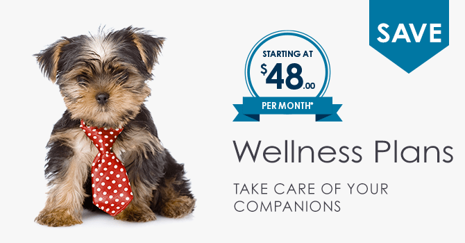 Wellness Plans | Providence South Animal Hospital | Waxhaw Veterinarian