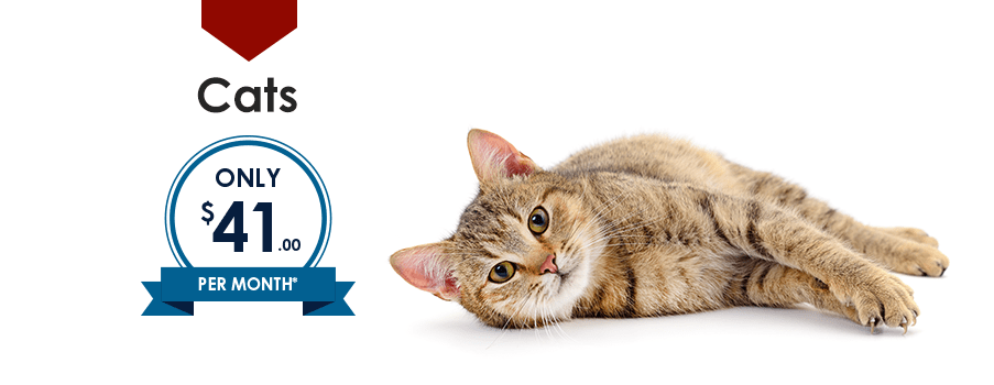 Cats | Providence South Animal Hospital | Waxhaw Veterinarian