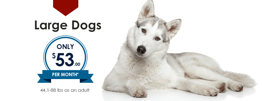 Large Dogs | Providence South Animal Hospital | Waxhaw Veterinarian