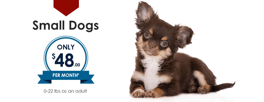 Small Dogs | Providence South Animal Hospital | Waxhaw Veterinarian