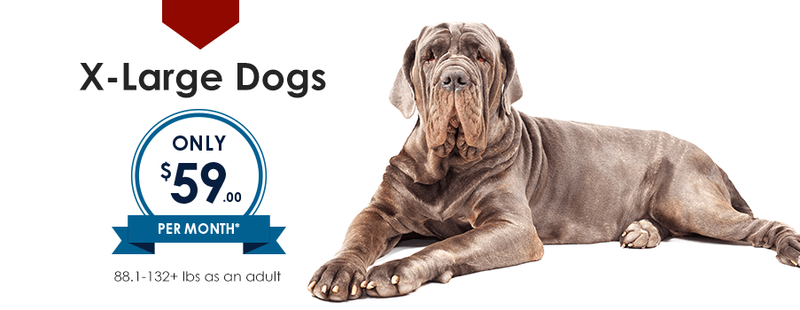 X-Large Dogs | Providence South Animal Hospital | Waxhaw Veterinarian